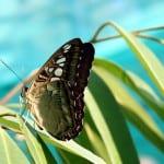 Audyty i sprawozdawczość środowiskowa